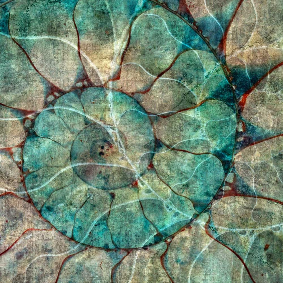 Nautilus фото цена